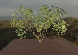 XF-shrub