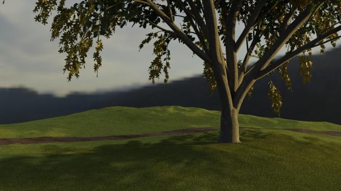 grass_path